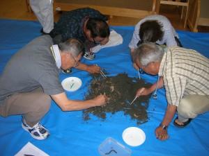 土壌生物の採取状況