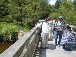 橋の上から水辺の風景や生き物を撮影