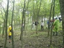 4mの竹竿による調査地設定