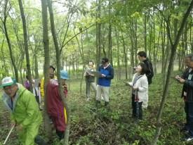樹冠広がり調査